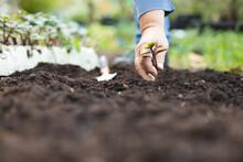 Hand Of Caucasian Male Gardener Planting Seedling At Garden Centre