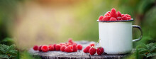 Full Cup Of Fresh Raspberries Ready To Eat On Summer Green Background. Healthy Lifestyle Concept. Summertime Harvest.