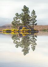 Pine Trees On A Rocky Outcrop In A Lake, California, USA