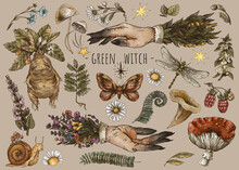 Vintage Magic Plants, Witch Hands, Witchcraft Mystery, Mandrake Root, Mushrooms, Flowers, Chamomile, Amanita, Fern Leaves