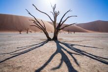 View Of The Iconic Desert In Namibia, View Of Deadvlei Salt Pan Trees In Sesreim Soussuvlei Namib-Naukluft National Park, Namibia.