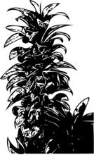 Vector Illustration Of A Tall Tropical Plant In Black And White