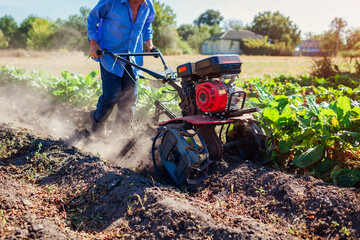 Farmer driving small tractor for soil cultivation and potato digging. Autumn harvest potato picking