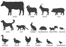 Silhouettes Of Animals Of The Farm And Suburb, Icon Set. Vector Illustration.