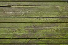 Green Moss On Wooden Board
