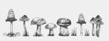 Set Of Mushrooms. Outline With Grey Background. Vector Sketch Illustration