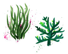 Hand Drawn Watercolor Illustration With Sea, Underwater Life.Calm Green Algae From The Deep Sea. Set With Hand-painted Watercolor Elements Isolated On White.Nautical Elements, Sea Life, Fish, Seahorse