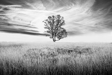 Isolated Tree In The Field Black And White Landscape