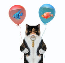 A Colored Cat Holds Balloons With Water. Inside Them Are Aquarium Fish. White Background. Isolated.
