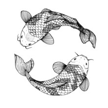 Koi Carp Swimming Sketch. Vector Illustration. Tattoo Print. Hand Drawn Illustration For T-shirt Print, Fabric And Other Uses.