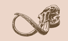 Graphical Vintage Hand-drawn Skull Of Mammoth  On Sepia Background, Vector Paleontological Element