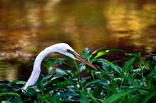 Bird On The Hunt