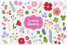 Floral Set - Poppy, Clover, Bellflower, Quatrefoil, Berries, Leaves, Flowers