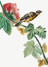 Vintage Bird Flower Branch Illustration
