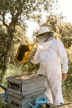 Beekeeper Checking Honeycomb In Summer Day