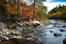 New England Forest And Stream In Fall