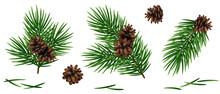 Christmas Fir Tree Branches With Brown Pine Cones And Needles Set Isolated On White Background. Vector Illustration.