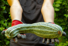 Woman Shows A Huge Zucchini From Her Garden