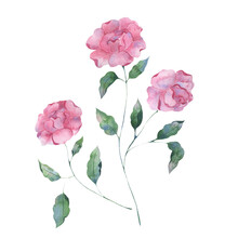 Watercolor Illustration Of Lilac Peony Flowers On A Pink Background. Botanical Illustration For Packaging Design, Texture, Fabric, Wallpaper, Website, Postcard.