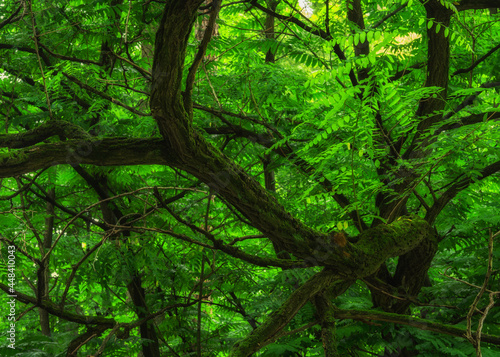 Gałęzie starego drzewa w parku miejskim