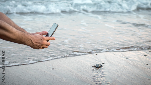 Valokuva Human hands with a smartphone making photo of wild sea turtle hatchling on the beach