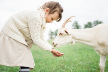 Little Girl Feeding Goats On The Farm. Agritourism Concept. Life In The Countryside