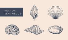 Vector Seashells