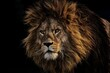 Lion facing , Lion taking down , Symbol of power , Lion watching on the attack , wild animal , king of the jungle , lion king , yellow lion , pack leader lion flock , fierce lion , attacking lion ,