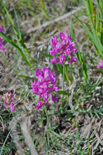 A Cluster Of Wyoming Wild Flowers