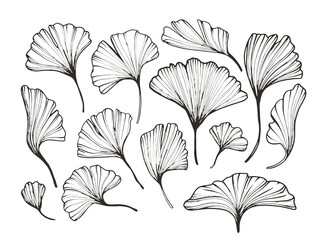 abstract florals minimalistic line art. Hand drawn botanical elements, sketch foliage set. Natural silhouette icons.