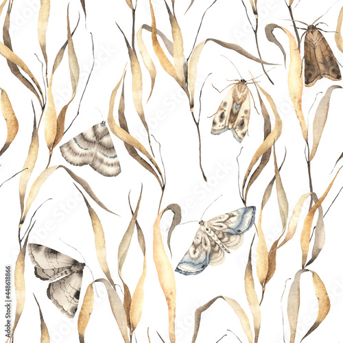 Fotomural Floral seamless pattern with beautiful moths and dry golden grass, abstract watercolor print isolated on white background, vintage wallpaper or textile, wildlife illustration