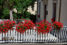 Pots With Red Geranium Flowers On Display On A Sunny Terrace Herald Summer