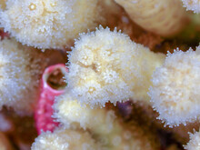 Close Up Coral Reef