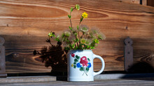 A Pot With Geum Montanum On A Wood Table