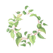 Green Wreath Of Curl Plant, Watercolor Beautiful Round Frame For Your Text Or Design, Delicate Floral Illustration On White Background.
