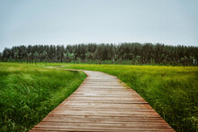 A Picturesque Wooden Walking Path Through A Swamp With Tall Grass In Summer.Quiet Nature Trail, Beautiful Landscape