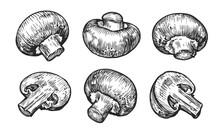 Champignons Mushrooms Set. Hand Drawn Sketch Vector Illustration