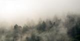 Fototapeta Na ścianę - Krajobraz leśny wierzchołki drzew las we mgle