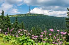 Summer View Of Praděd, The Fifth-highest Mountain Of Czech Republic, Located In Hrubý Jeseník Mountains