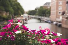 Bridge And Flowers In Amsterdam