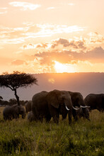 Elephants In The Sunset.