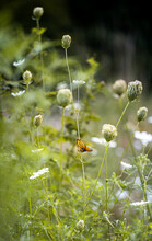 Monarch Butterfly In Wildflower Field