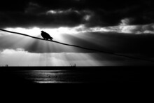 A Pigeon On A Wire.