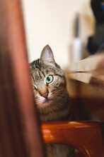 Portrait Of Cute Cat At Home