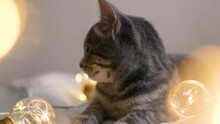 Adorable Gray Striped Baby Kitten Sweetly Sleeping With Christmas Garland On
