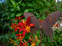 Blooming Lilium Flowers Next To A Rusty Metal Butterfly In The Garden