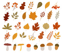 Colorful Autumn Set Of Leaves, Mashrooms And Acorns. Vector Illustration Clipart