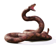 Titanoboa, The Largest Snake That Ever Lived, Isolated On White Background