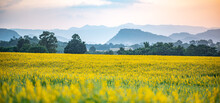 Nature Landscape Outdoor Meadow Field Of Yellow Flower In Summer, Beautiful Blossom Green Grass Plant Background With Blue Sky, Countryside Land In Spring Season
