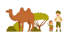 Man Dad With His Son As Traveler On Safari Tour Watching Camel Vector Illustration